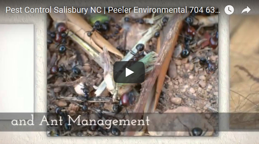 Peeler Environmental YouTube Video