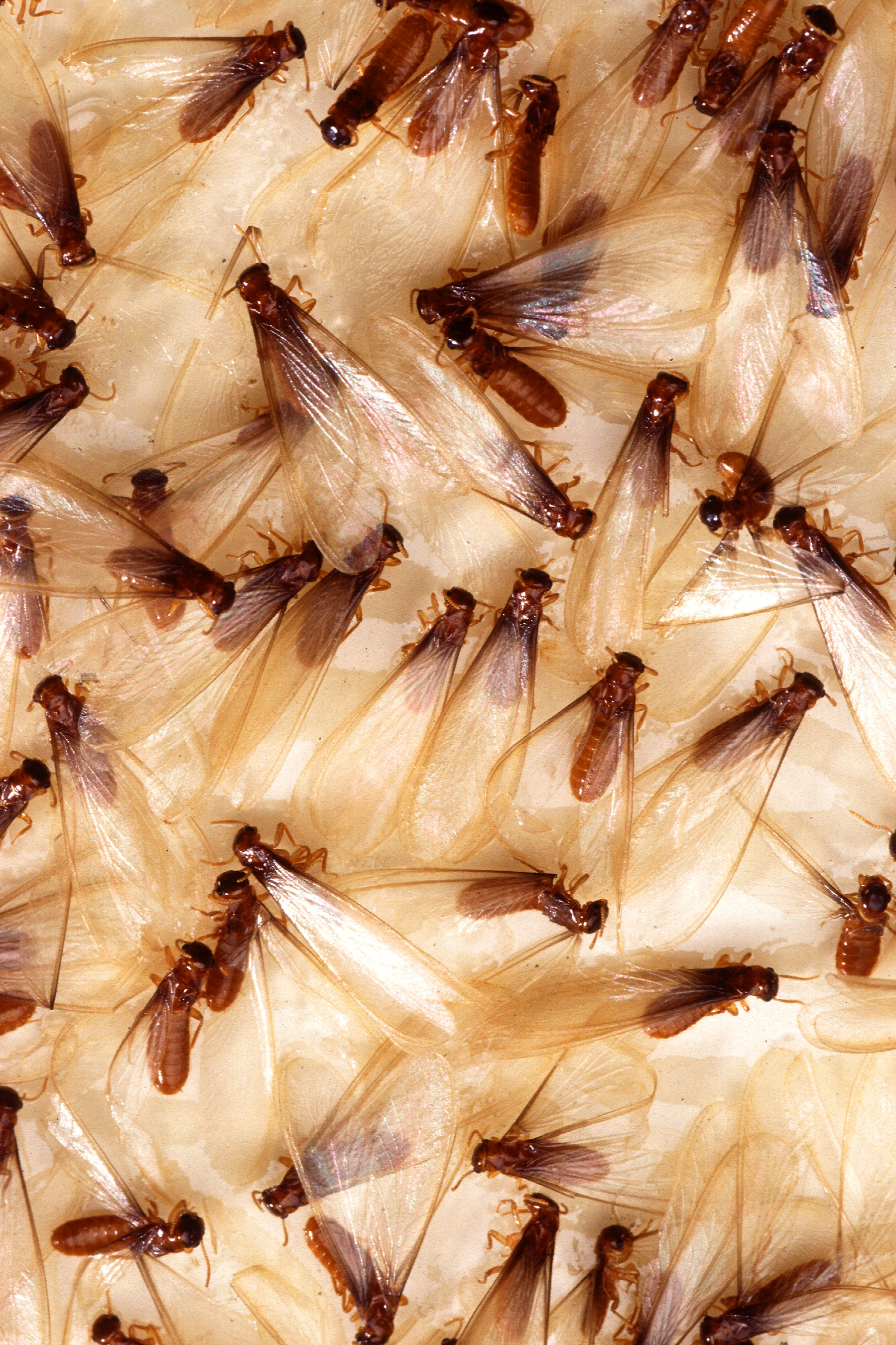 Tips on Pest Control in Salisbury, NC: Knock on Wood-You Might Have Termites