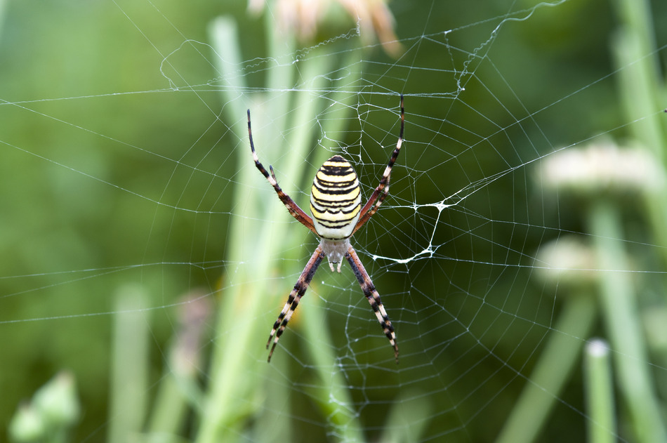 The Benefits of Spiders in Salisbury NC