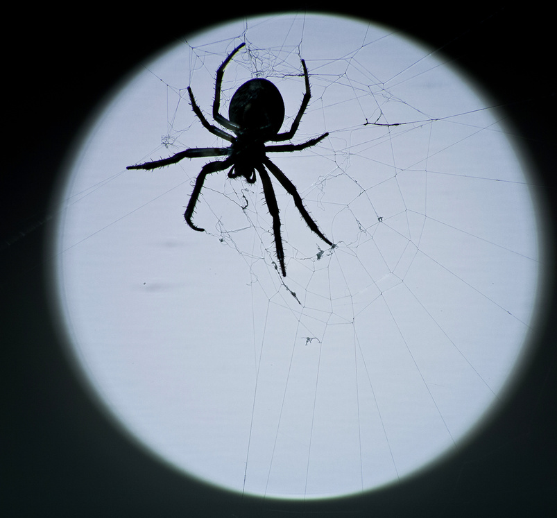 Poisonous Spiders and Spider Control in Salisbury NC